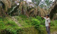 PT TAE Diduga Rambah Hutan Kawasan